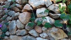 Pared de piedra con las hojas verdes foto de archivo