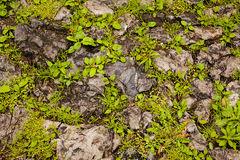 Pared de piedra con las plantas Imagen de archivo libre de regalías