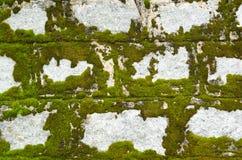 Pared de piedra cubierta con el liquen Imagenes de archivo