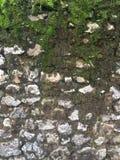 Pared de piedra cubierta de musgo sucia de la roca fotografía de archivo