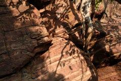 Pared de piedra de Bhimbetka Fotografía de archivo libre de regalías
