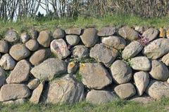 Pared de piedra del Frisian en la isla de Sylt con el deadnettle Fotografía de archivo libre de regalías