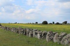 Pared de piedra hermosa que separa los campos y los animales fotografía de archivo libre de regalías