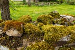 Pared de piedra por completo de musgos y de liquenes Foto de archivo