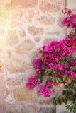 Pared de piedra rústica con las flores coloridas Imagenes de archivo