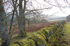 Pared de piedra seca cubierta de musgo en Northumberland fotos de archivo libres de regalías
