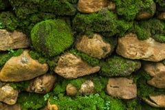 Pared de piedra vieja con el musgo Imagen de archivo libre de regalías