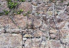 Pared de piedra vieja con las raíces Foto de archivo libre de regalías