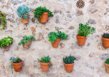 Pared de piedra vieja con los potes de la ejecución con las plantas verdes Textura amarillenta Fotografía de archivo libre de regalías