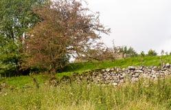 Pared de piedra y árboles Foto de archivo