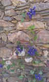 Pared de piedra y flor Imagen de archivo libre de regalías