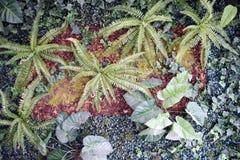Pared de plantas Imagenes de archivo