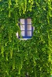 Pared de una casa con la ventana cubierta con la hiedra imagen de archivo libre de regalías