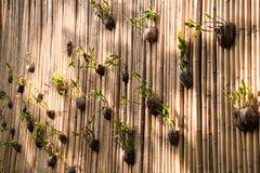 Pared decorativa del bambú con las plantas verdes fotografía de archivo