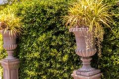 Pared del árbol con los potes de la planta del estilo romano imagen de archivo