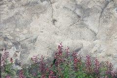 Pared del cemento con las flores foto de archivo