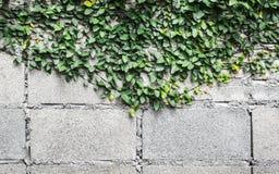 Pared del cemento y leafbackground verde fotografía de archivo