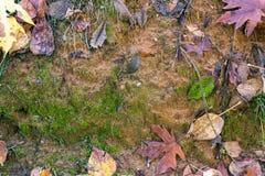 Pared del fango en caída imagen de archivo libre de regalías