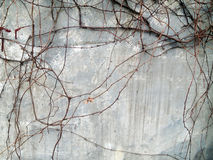Pared del gris de la vid Foto de archivo libre de regalías