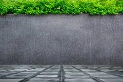 Pared del muro de cemento o del mármol y piso concreto con las plantas ornamentales o el árbol de la hiedra o del jardín Fotos de archivo