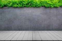Pared del muro de cemento o del mármol y piso de madera con las plantas ornamentales o el árbol de la hiedra o del jardín Fotos de archivo