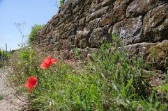 Pared del viñedo hecha de bloques naturales áspero tallados de la piedra con las amapolas y la hierba Imágenes de archivo libres de regalías