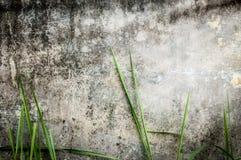 Pared de piedra oscura vieja del edificio con la hierba verde. Fotografía de archivo libre de regalías