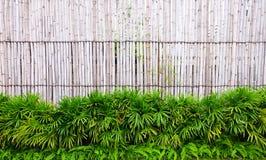 Pared hecha de la cerca de bambú del vintage imágenes de archivo libres de regalías