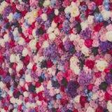 Pared hermosa hecha de las flores púrpuras violetas rojas, rosas, tulipanes, prensa-pared, fondo Foto de archivo libre de regalías