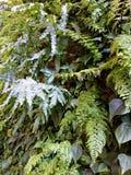 Pared interior viva 4k de la planta verde Imagen de archivo
