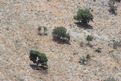 Pared ligera de la colina con los pequeños árboles en ella Foto de archivo libre de regalías