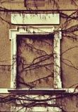 Pared mística con la ventana emparedada y las vides overgrown en el st del grunge Imagen de archivo