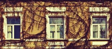 Pared mística con las ventanas y las vides overgrown en el estilo del grunge (r Imagenes de archivo