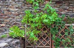 Pared marrón de piedra del fondo con las plantas verdes y el enrejado de madera Imagen de archivo