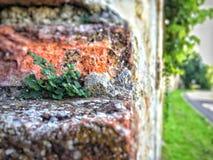 Pared medieval de la abadía Foto de archivo