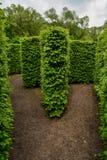 Pared natural del laberinto de árboles Foto de archivo libre de regalías