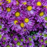 Pared púrpura de las flores Imagen de archivo libre de regalías