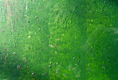 Pared pintada verde Imágenes de archivo libres de regalías