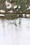 Pared sucia vieja con el molde Imagen de archivo libre de regalías