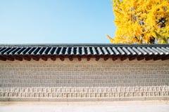 Pared tradicional coreana con el árbol amarillo del ginkgo del otoño en Seúl, Corea imagenes de archivo