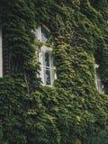 Pared verde Fotografía de archivo libre de regalías