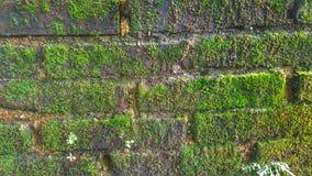 Pared verde Fotos de archivo libres de regalías