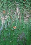 Pared verde con el viejo fondo lamentable del estilo del grunge de la pintura Foto de archivo libre de regalías