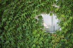 Pared verde con la ventana del wite Foto de archivo libre de regalías