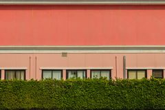 Pared verde de la cerca del seto delante del edificio de oficinas Le verde Fotos de archivo libres de regalías
