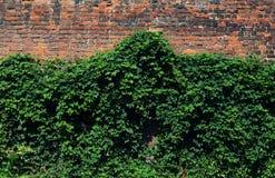 Pared verde de la fachada del ladrillo Foto de archivo libre de regalías