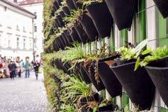 Pared verde de plantas en Ljubljana, Eslovenia Imágenes de archivo libres de regalías