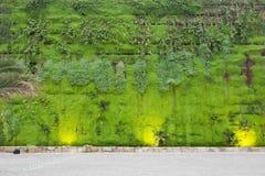 Pared verde ecológica imagen de archivo libre de regalías
