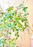Pared verde para el oxígeno en oficina Imagen de archivo libre de regalías