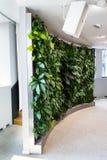 Pared verde viva, jardín vertical dentro con las flores y plantas bajo iluminación artificial en la sala de reunión de la reunión fotos de archivo